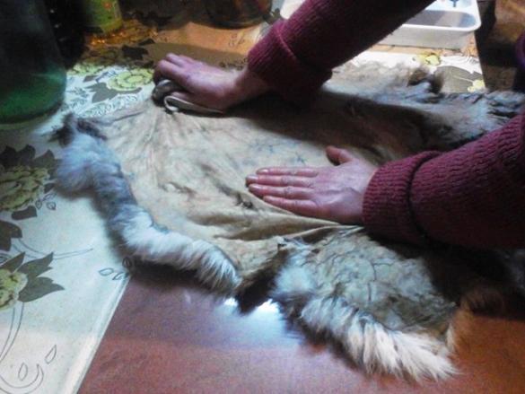 Как стричь мех кролика в домашних условиях