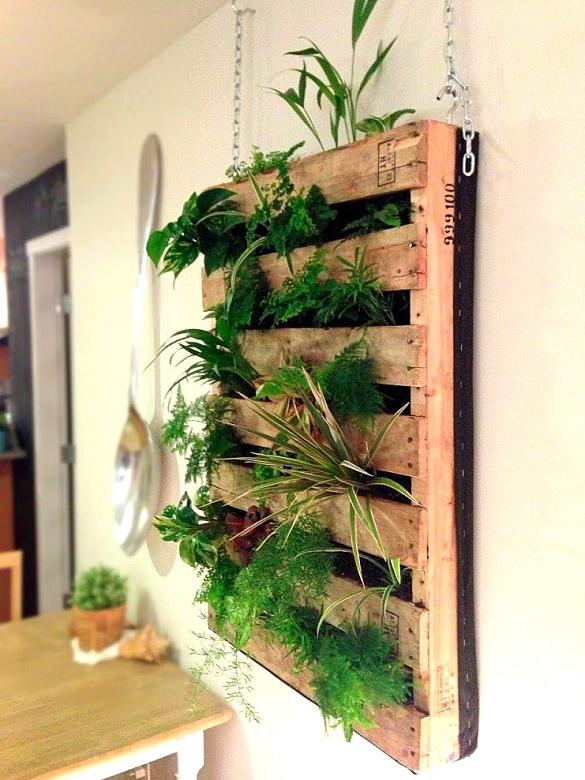 Вертикальное озеленение своими руками для квартиры