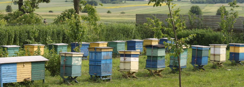 Как организовать пчелиную мини-ферму