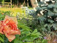 Фестиваль «Сады и люди» поразил идеями и их воплощением