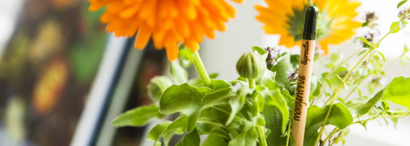 Посади карандаш – вырастет томат
