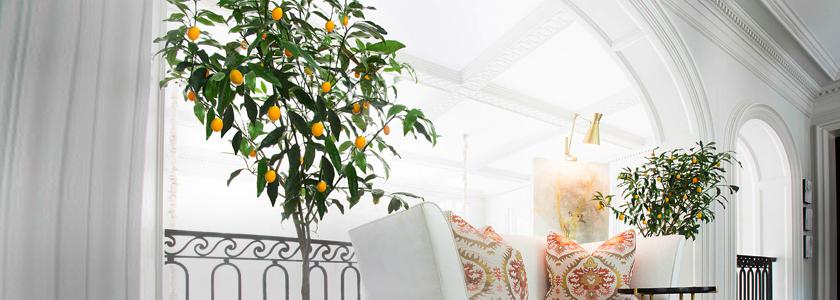 Выращиваем лимоны в закрытом помещении