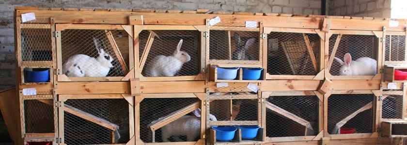 Простые способы оптимизации крольчатника