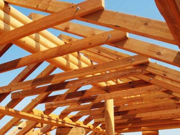 Свойства разных пород древесины - Дом и стройка - Статьи
