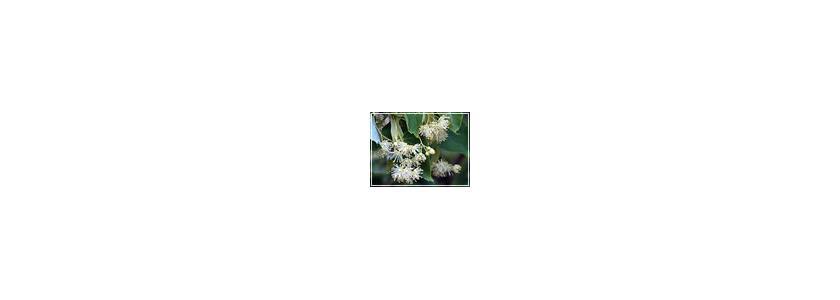 Использование декоративных садовых растений в качестве лекарственных