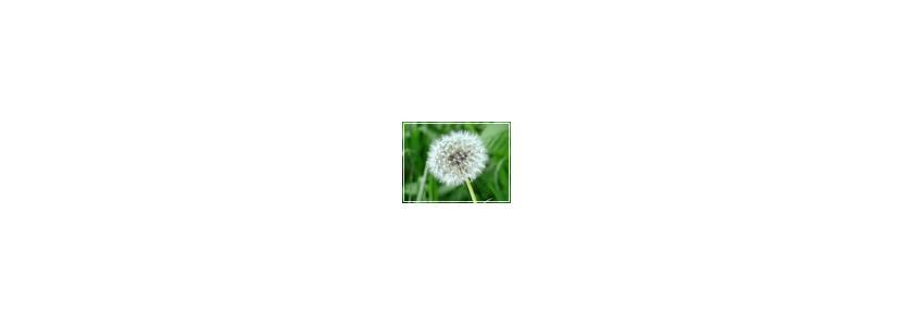 О чем могут сказать садоводу травы и цветы