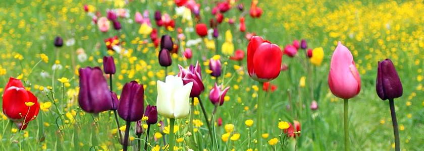 Как посадить цветы на газоне