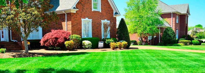 Как посеять идеальный газон