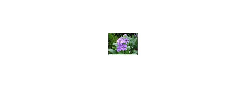 Наполнен ароматом вечер... Цветы, которые радуют своим благоуханием