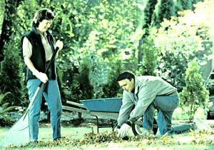 Важно убрать с газона опавшие листья - иначе трава может сопреть зимой.