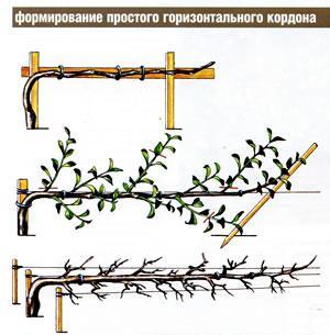 формовое садоводство