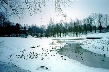 «Замороженные земли»  Подмосковья