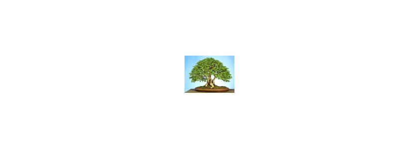 Treegator - система полива деревьев