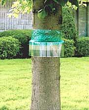 Защитный пояс для деревьев