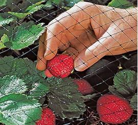 Сетка от птиц защитит ваши фрукты и ягоды
