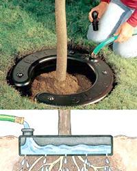 Кольцо для полива деревьев