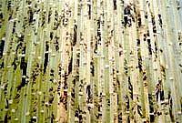 Облицовочные панели из бамбука