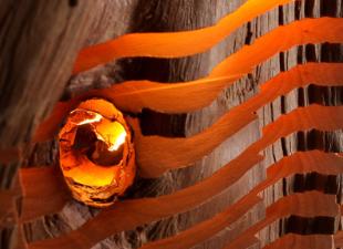 Анатомический светильник из дерева: своими руками
