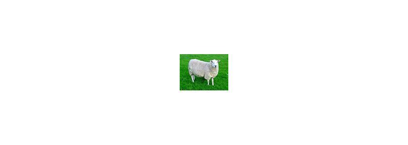 Газонокосилка против овцы