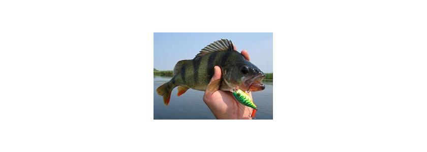 Вы можете исправить закон о рыболовстве