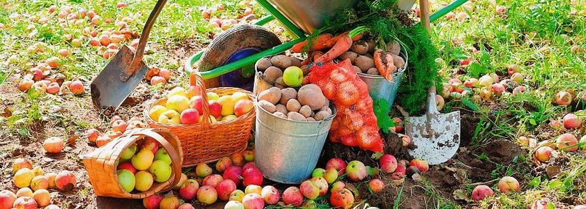 Срочное важное: сентябрьские дела в саду и огороде
