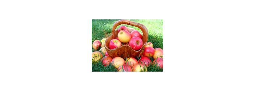 Время собирать урожай: новые устройства для сбора фруктов