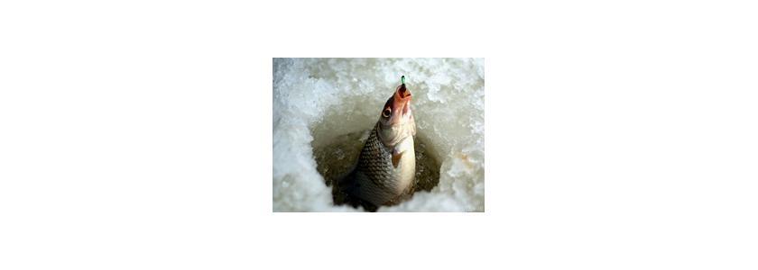 Рыбалка будет бесплатной и без сетей