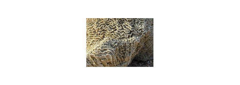 Цементные инновации: кораллы и стекло