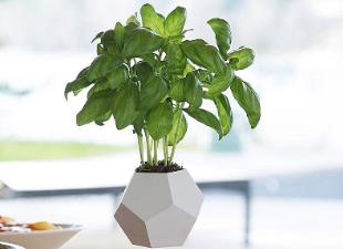 Летающие комнатные растения