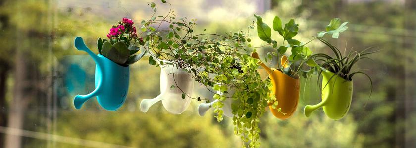 Растения на присосках