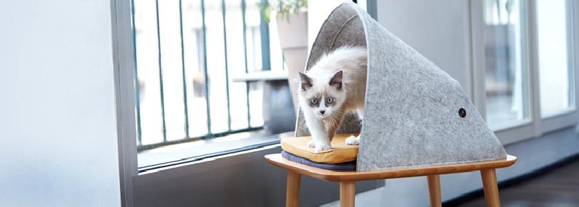 Валяная мебель для кошек
