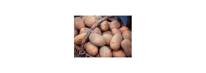 Пойдем копать картошку!