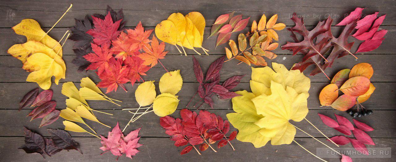Как выглядят деревья осенью