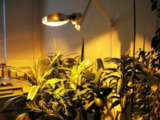 Искусственное солнце для растений