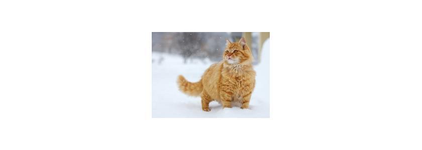 Чрезмерное внимание к кошкам опасно для их жизни и здоровья