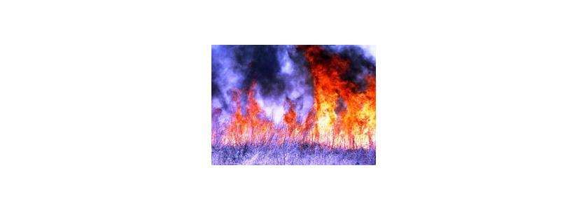 Огнеборец из Австралии, или как спасти дом от весеннего пала травы