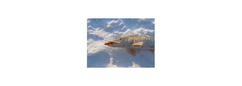 Рыболовные снасти и снаряжение. Новинки рынка