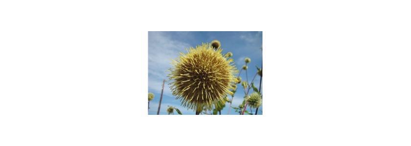Декоративные растения для вашего сада. Новинки рынка