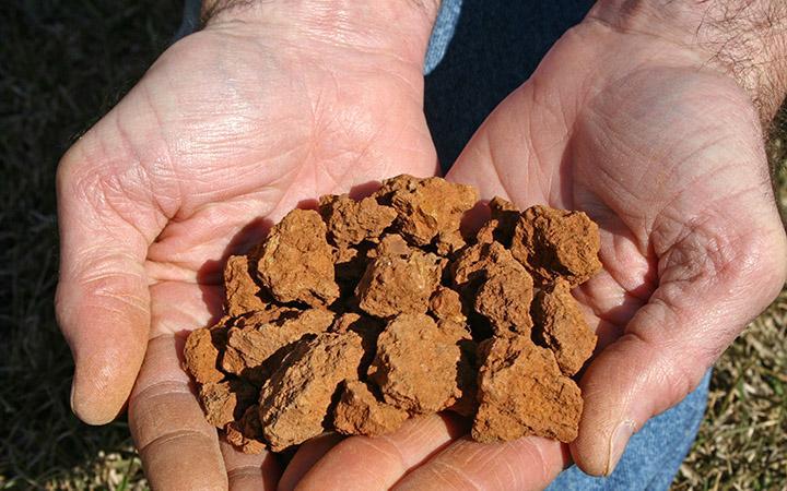 Глинистые почвы что сажать как 31