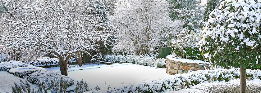 Как защитить растения от вымерзания и выпревания