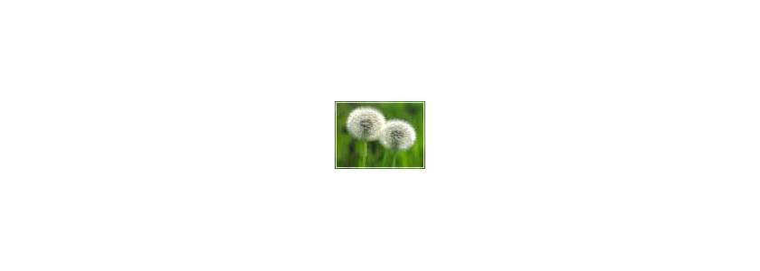 Борьба с сорняками. Советы садовода