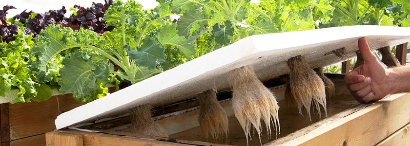 Ферма на крыше как способ городского земледелия
