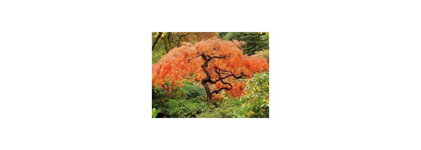 Выбираем деревья и кустарники для нашего сада
