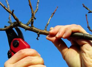 Дождались! Готовим плодовый сад к весне