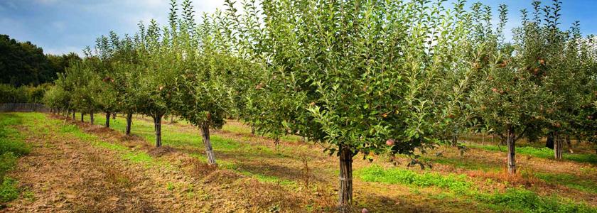 Выбираем место под фруктовые посадки