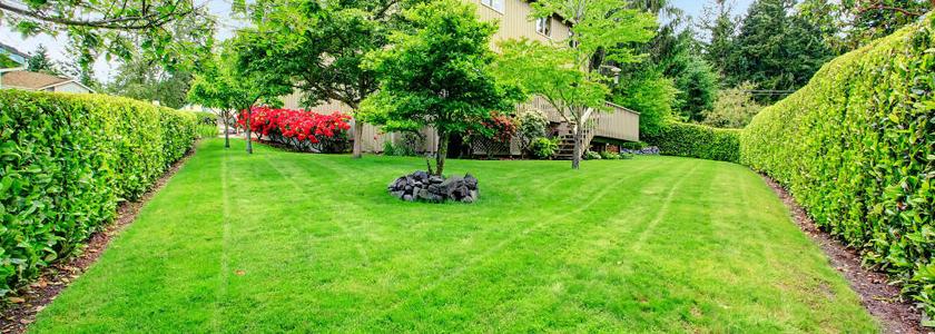 Идеальная лужайка: все для газона