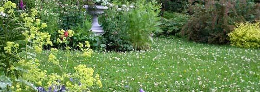 Белый клевер: красивый газон с минимальным уходом