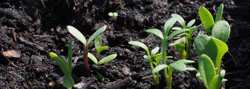 Домашние тесты почвы в вашем саду