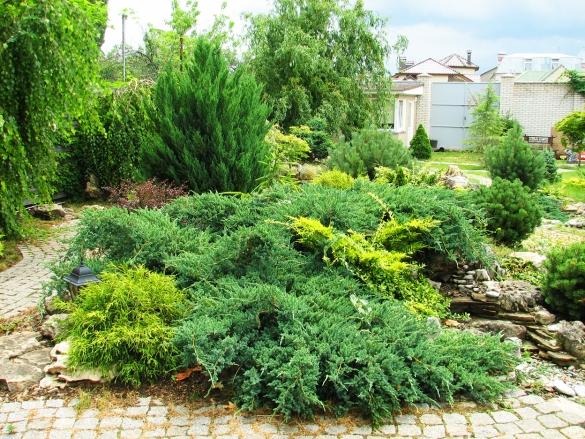 Схема рокария со списком растений 77