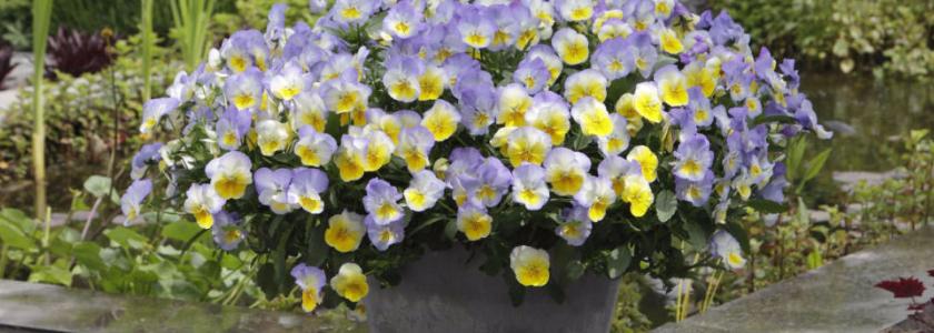 Как продлить летнее цветение